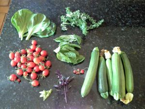 Radicchio, oregano, cherry tomatoes, basil, alpine strawberries, edamame, zucchini
